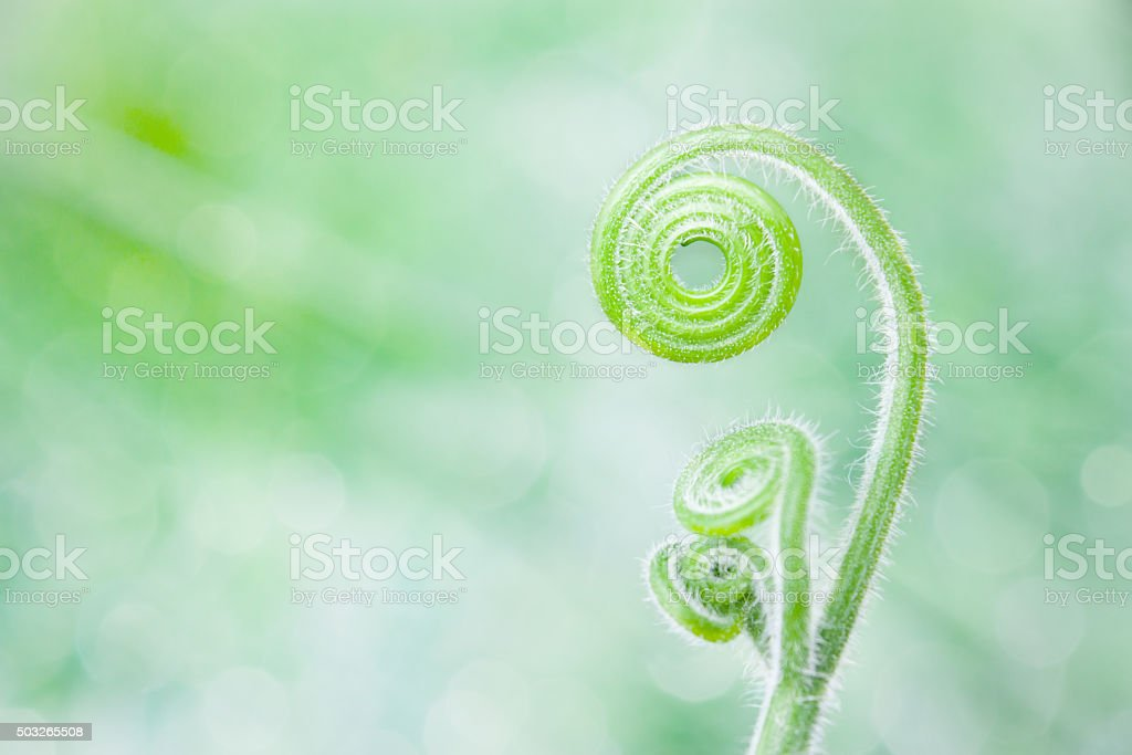 Beautiful curly twig pattern on green background stock photo