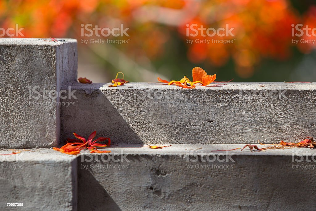 Beautiful Delonix Regia in red bloom, on a wall royalty-free stock photo