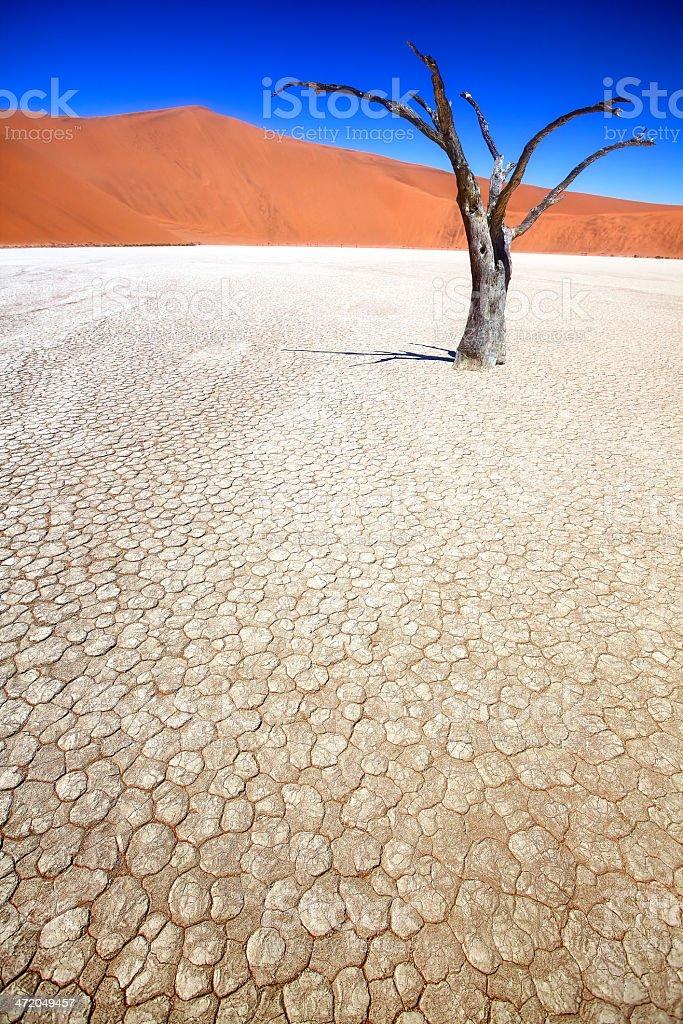 Beautiful Desert DeadVlei stock photo