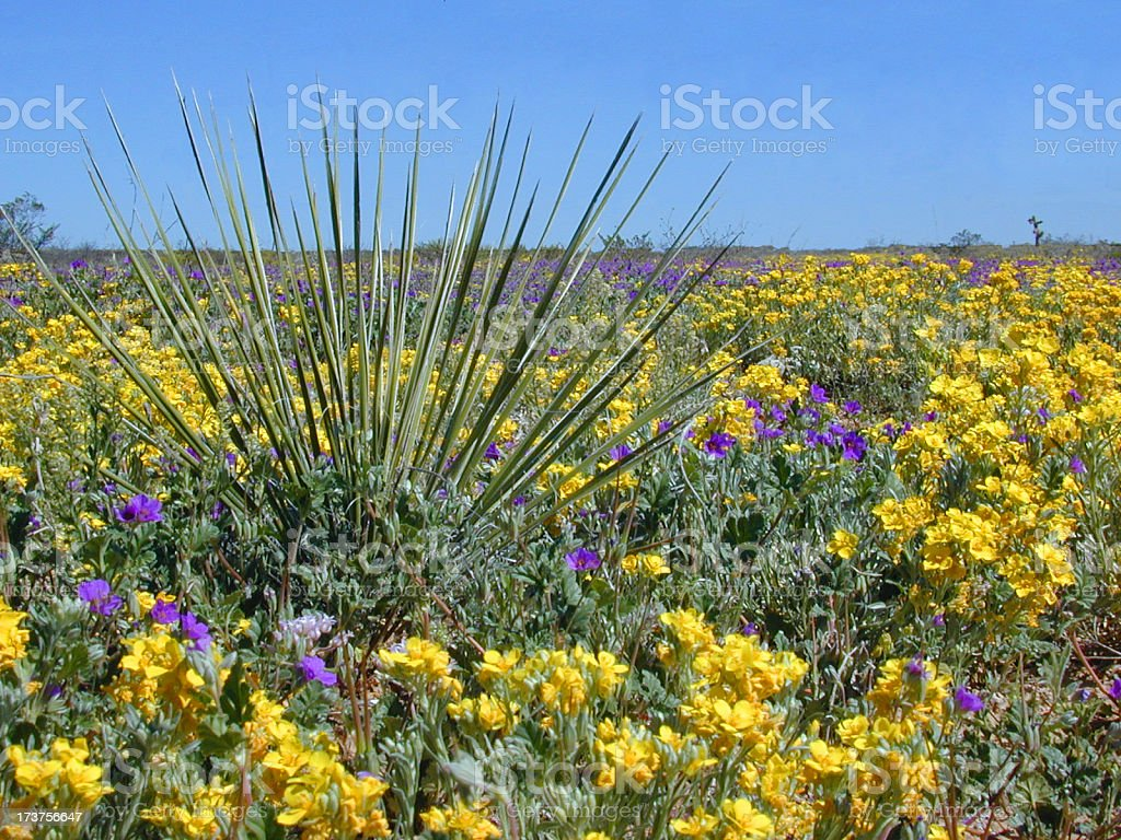 Beautiful desert flowers stock photo