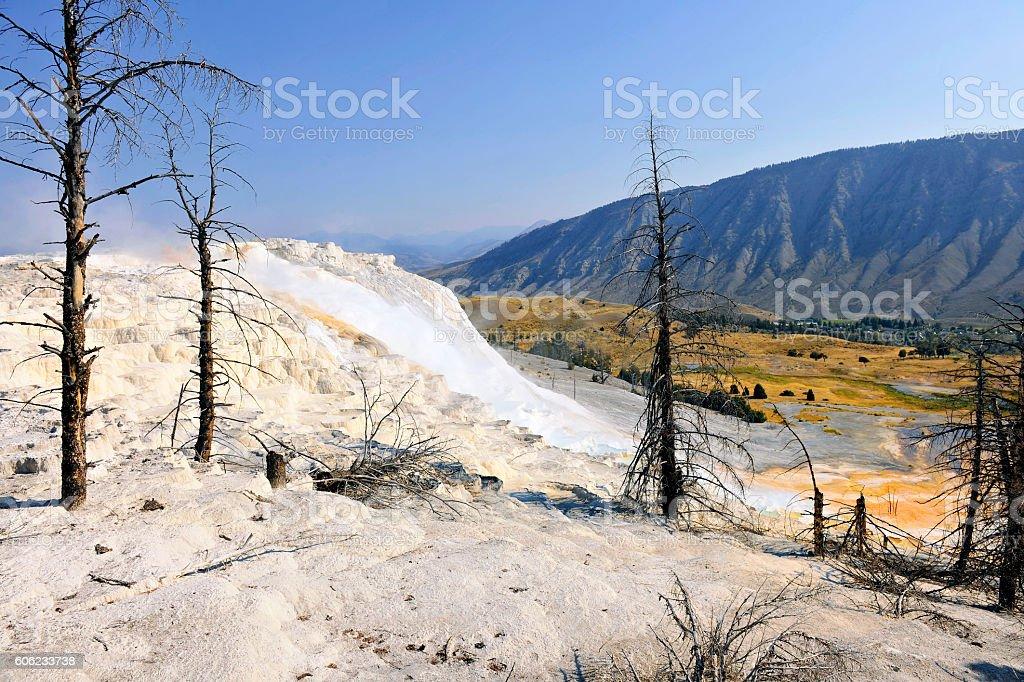 Beautiful Detail of Mammoth Spring ,dry tree,Yellowstone Wyoming USA stock photo