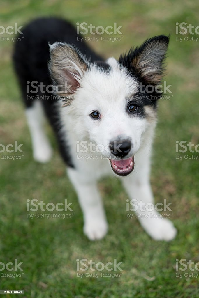 Beautiful dog at the park stock photo