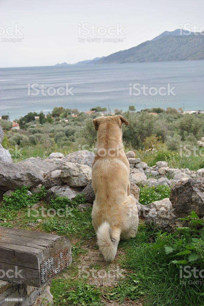beautiful dog looking at the sea stock photo