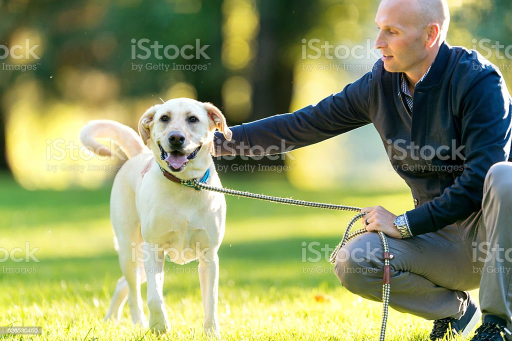 Beautiful dog on a leash held by its owner stock photo