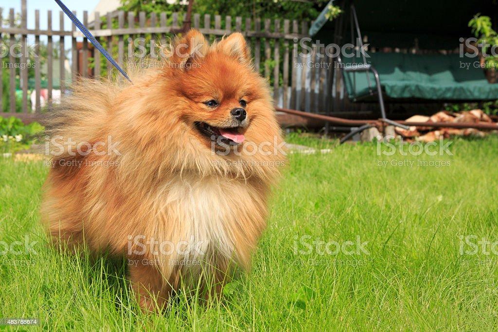 Beautiful dog on green grass stock photo