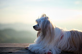 Beautiful dog on the wood table