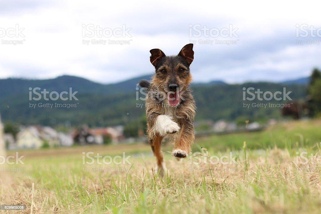 beautiful dog stock photo