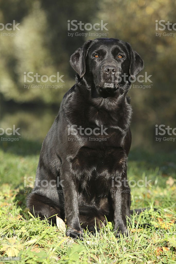 Beautiful dog sitting down royalty-free stock photo