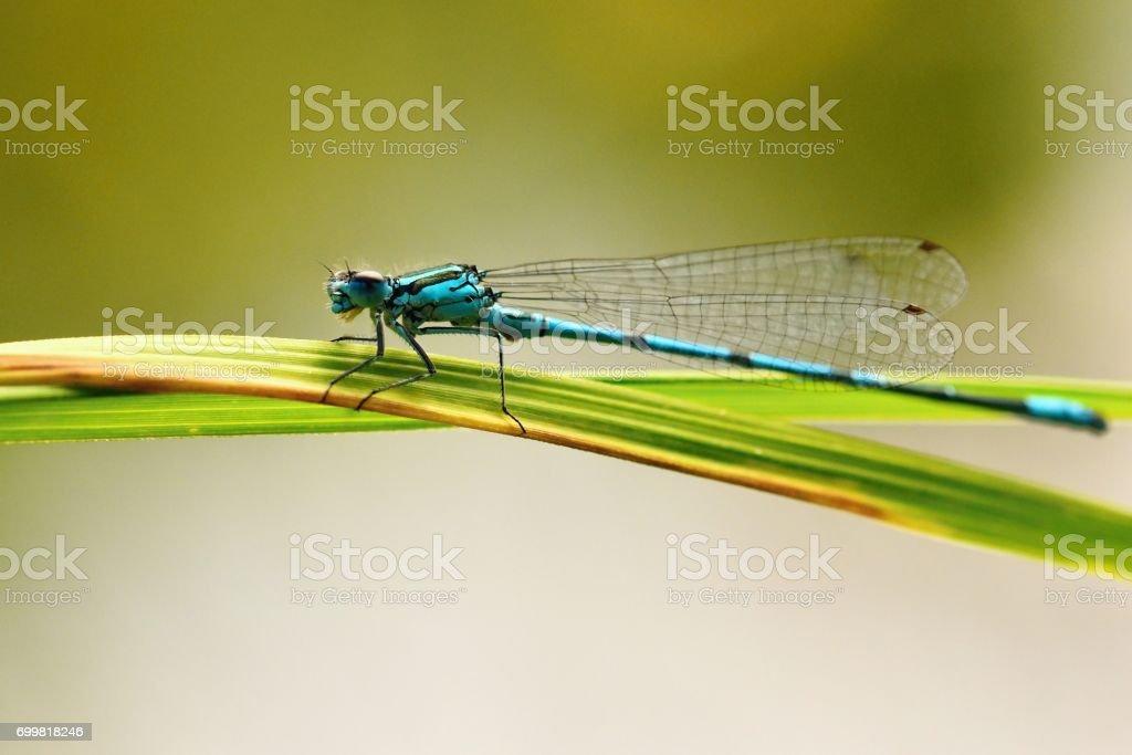 Beautiful dragonfly. Macro shot of nature. Libellula depressa. Insects close up. stock photo