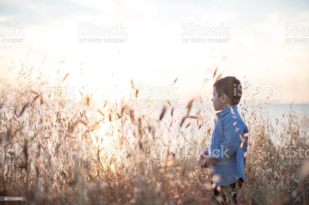 Beautiful dreaming little boy in a shirt among the plant field stock photo