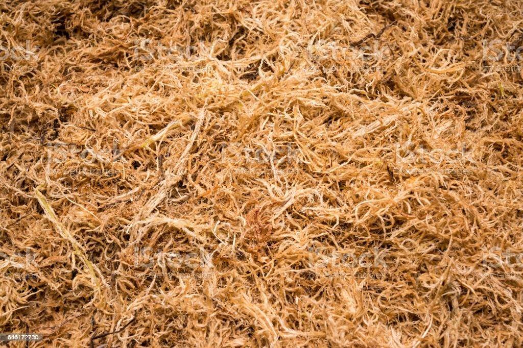 Beautiful dried sphagnum moss. stock photo