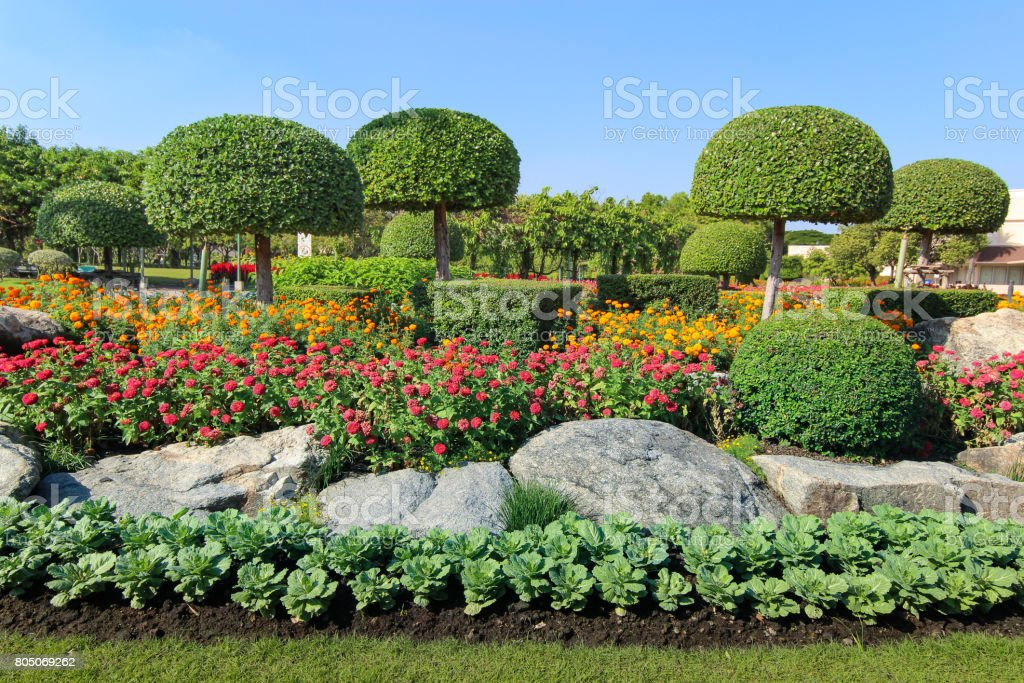 Beautiful dwarf tree and flowerbed stock photo