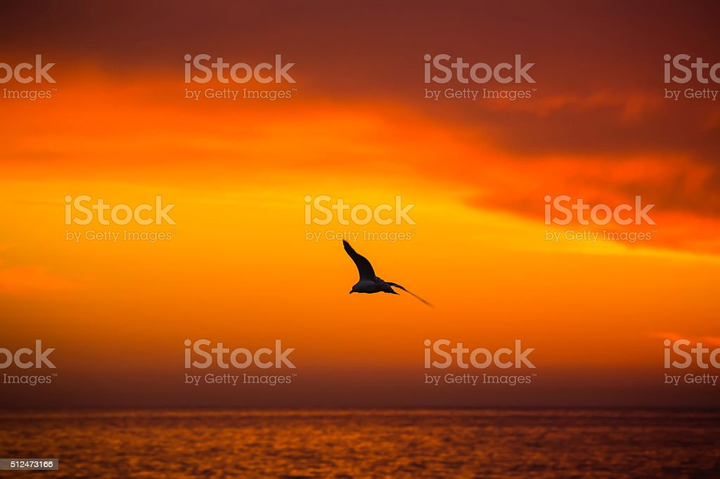 beautiful evening sunset over ocean stock photo