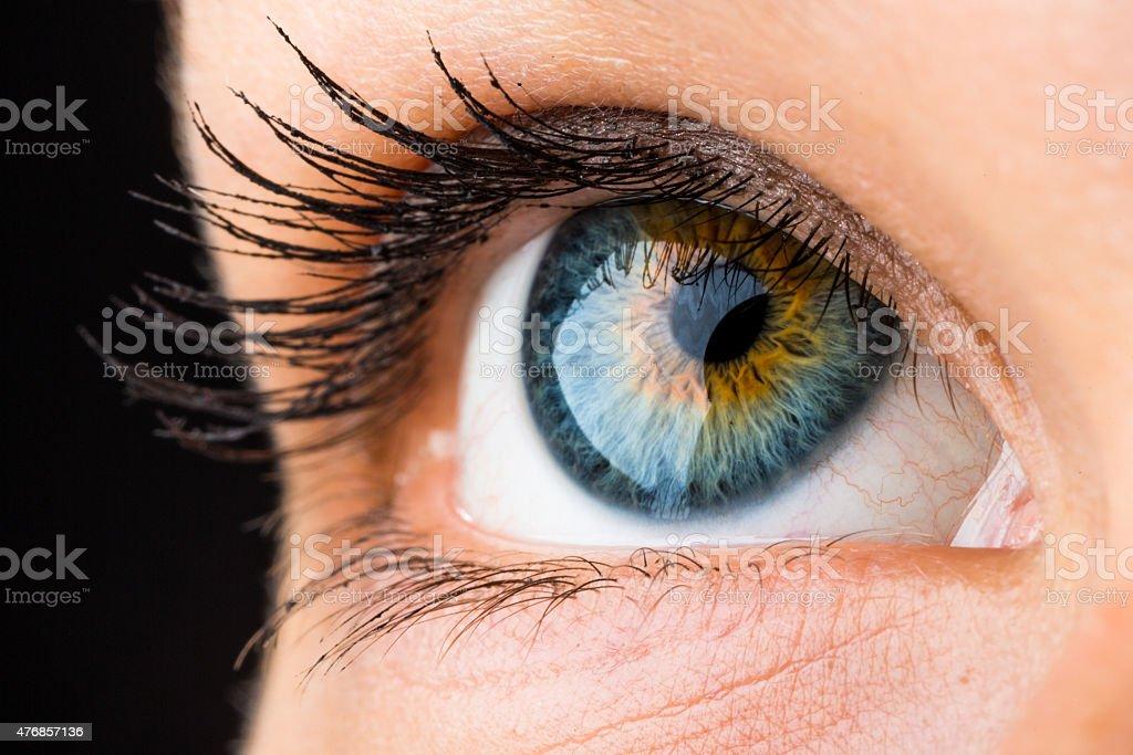 beautiful eye macro stock photo