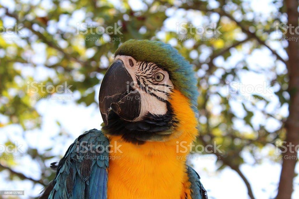 beautiful eyed parrot stock photo