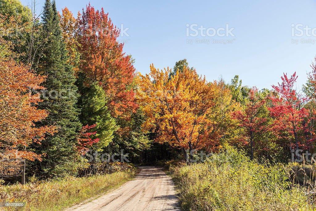 Beautiful Fall colors on pathway in Michigan stock photo