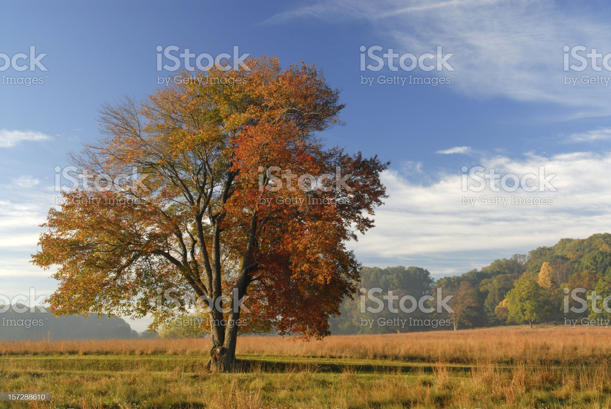 Beautiful Fall Colors royalty-free stock photo
