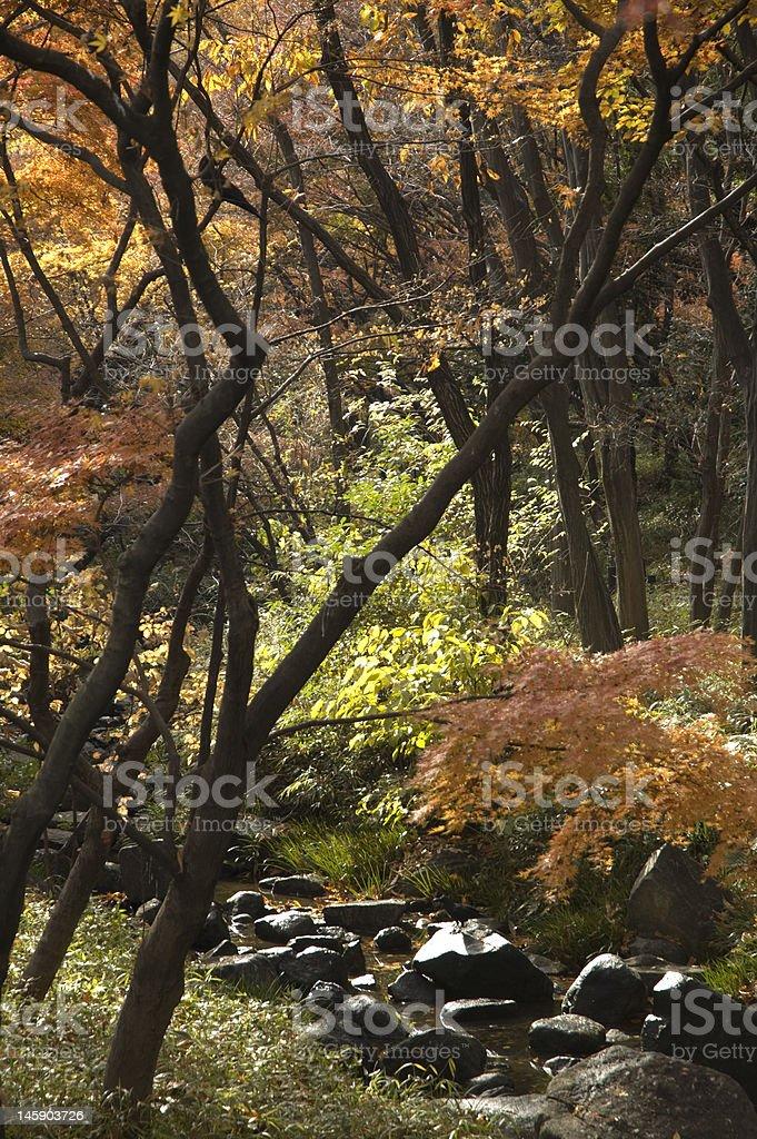 Beautiful fall scenery royalty-free stock photo