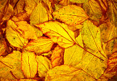 Beautiful fallen autumn leaves  background