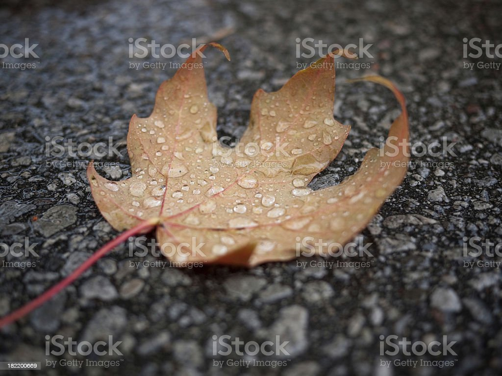 Beautiful Fallen Leaf royalty-free stock photo