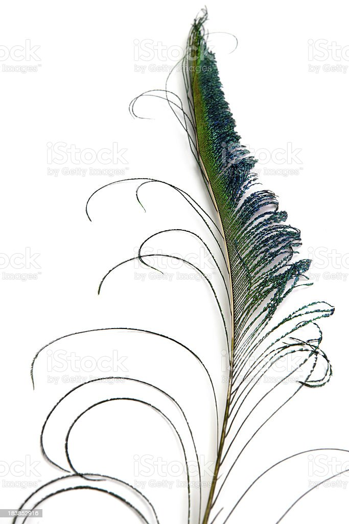 Beautiful Feather royalty-free stock photo