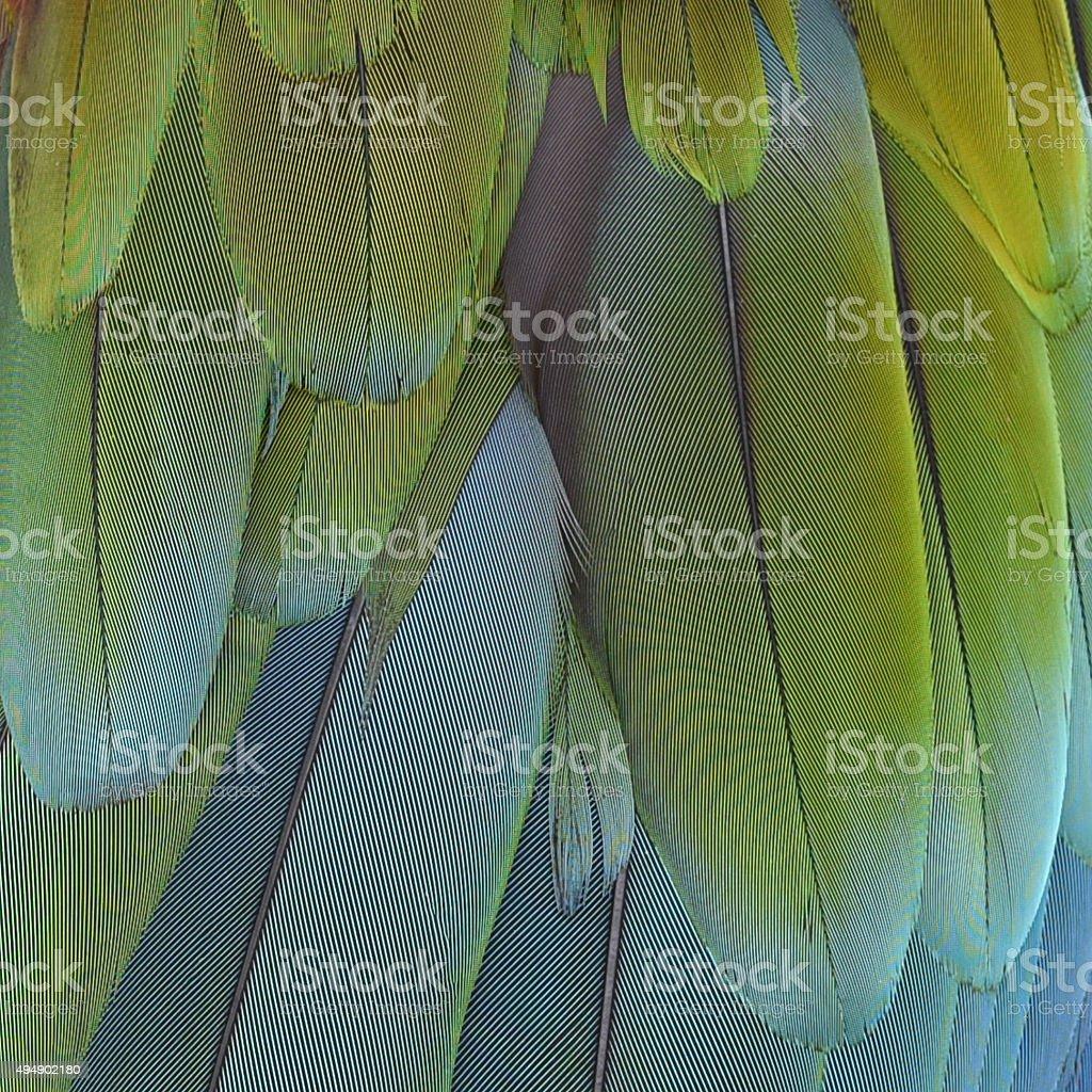Gros plan de plumes d'oiseaux, Ara macao. photo libre de droits