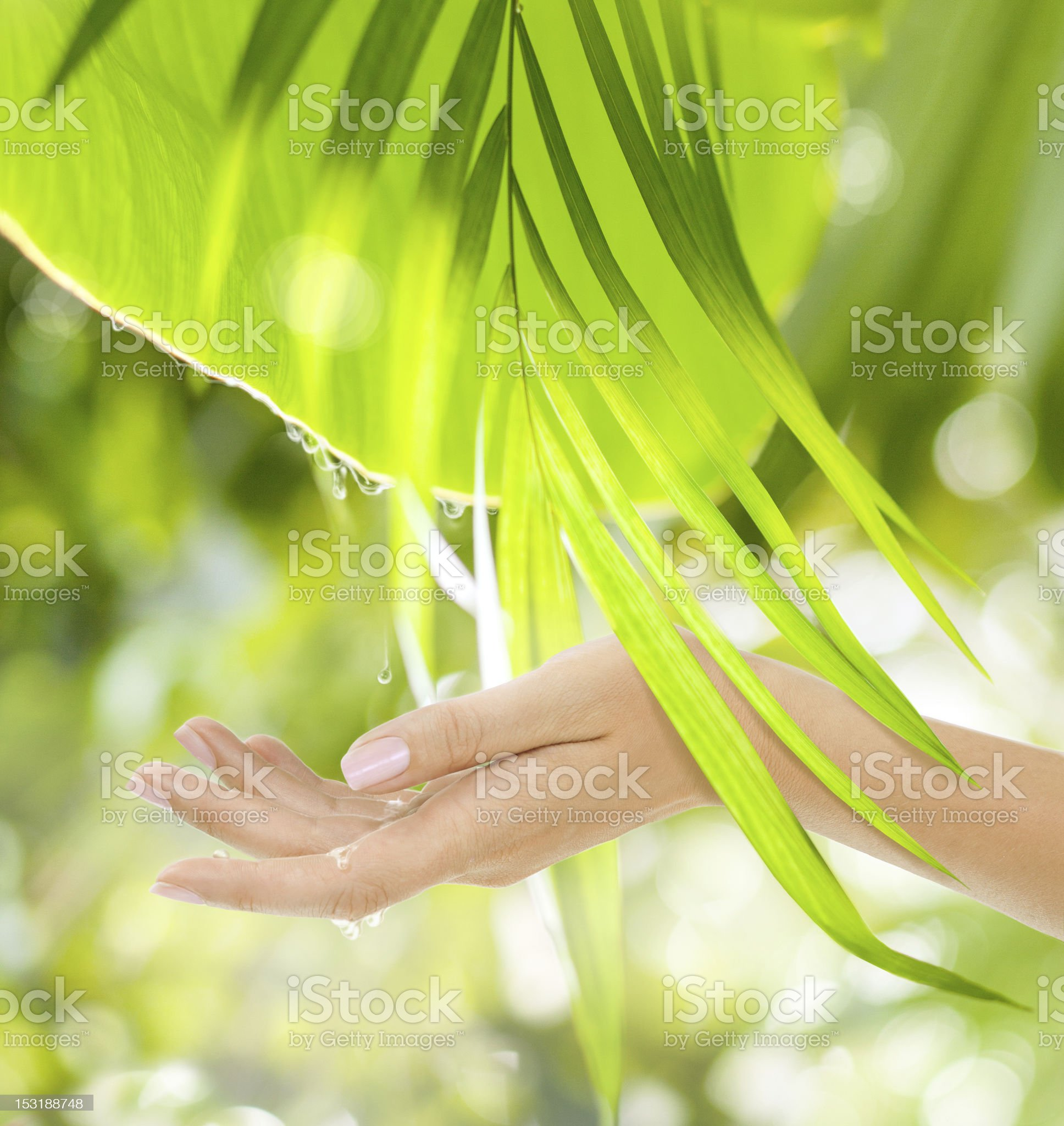 Beautiful Female Hand on the green background royalty-free stock photo