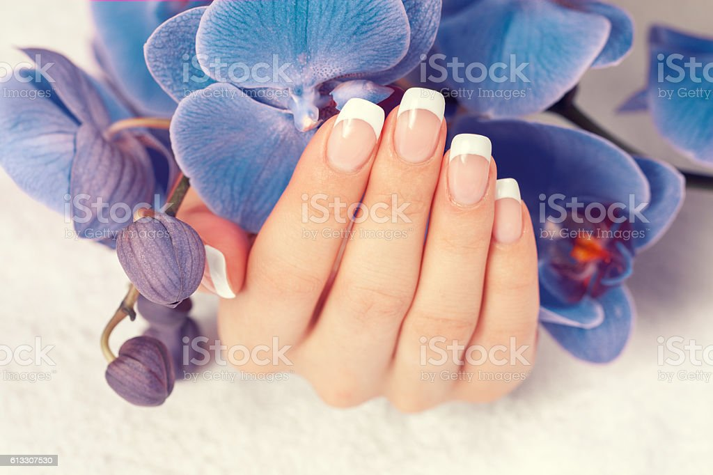 Beautiful female hand with french manicure on blue orchid flowers stock photo