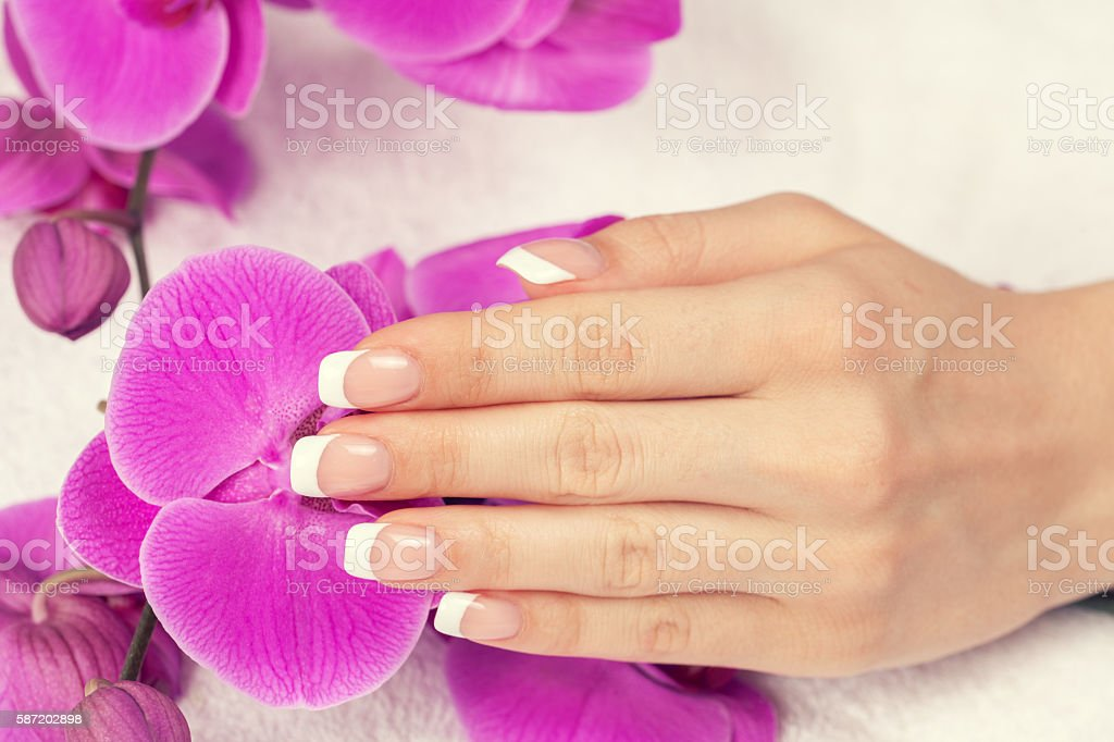 Beautiful female hand with french manicure on purple orchid flowers stock photo