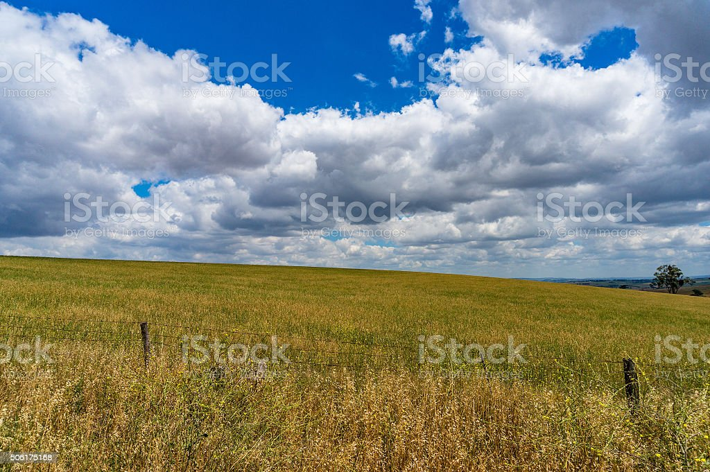 Beautiful field and bright blue sky with white clouds stock photo