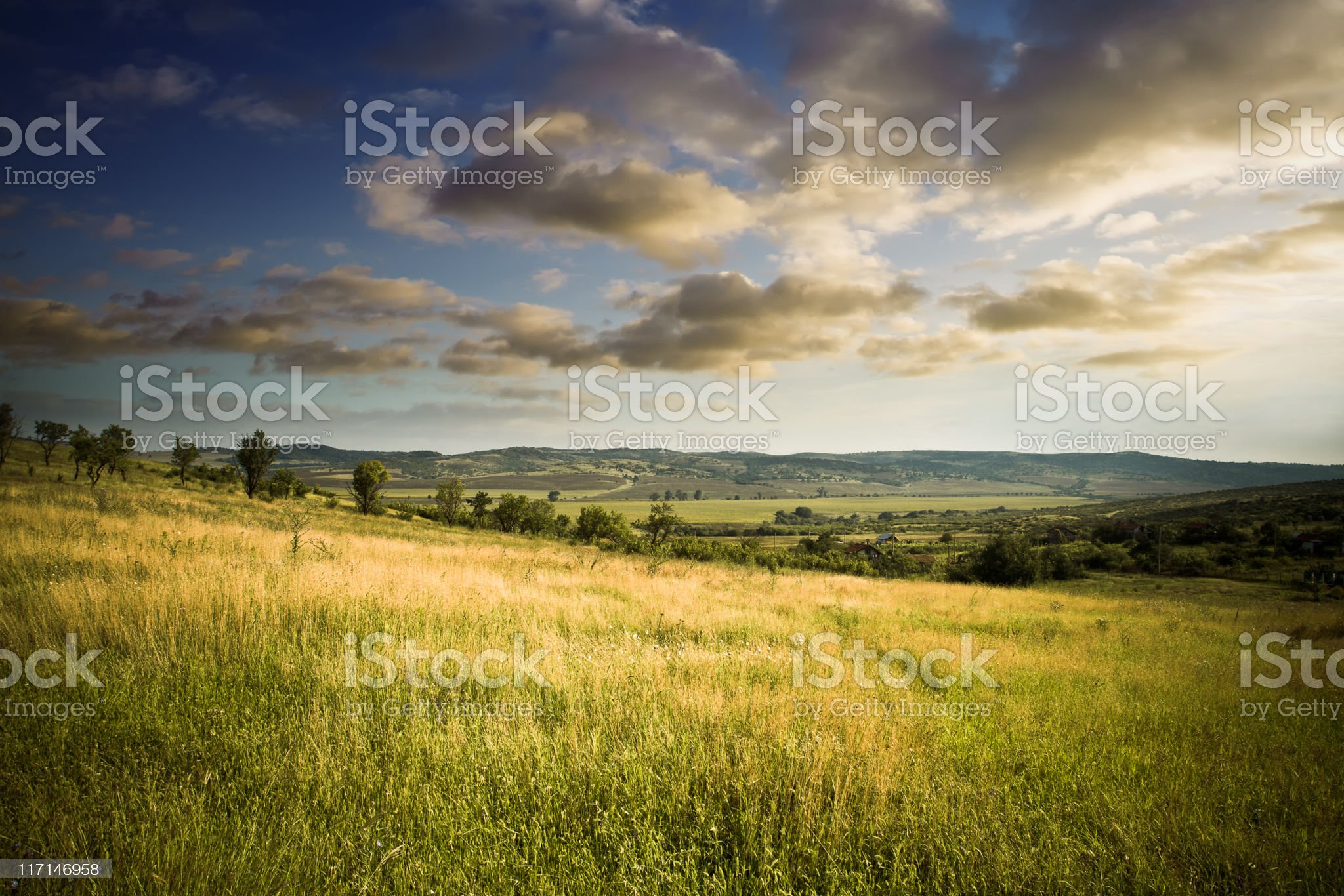 Beautiful field in the evening royalty-free stock photo