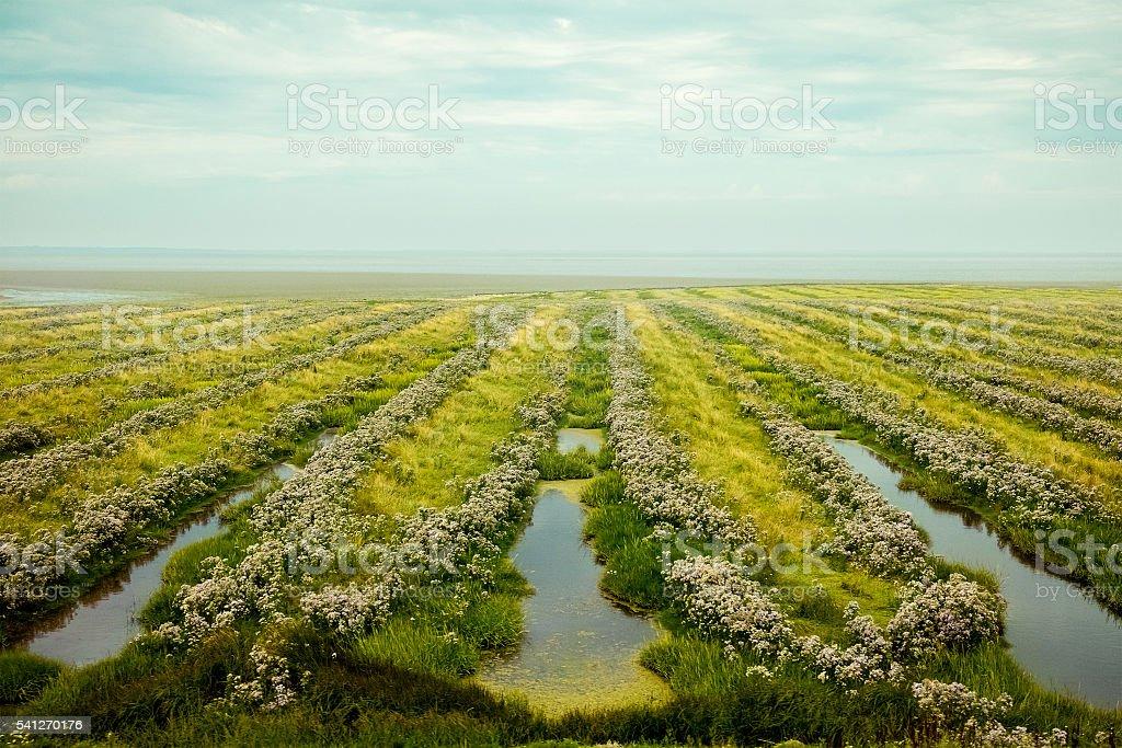 Beautiful field near the sea stock photo