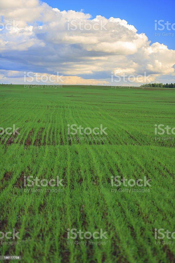 Beautiful field royalty-free stock photo