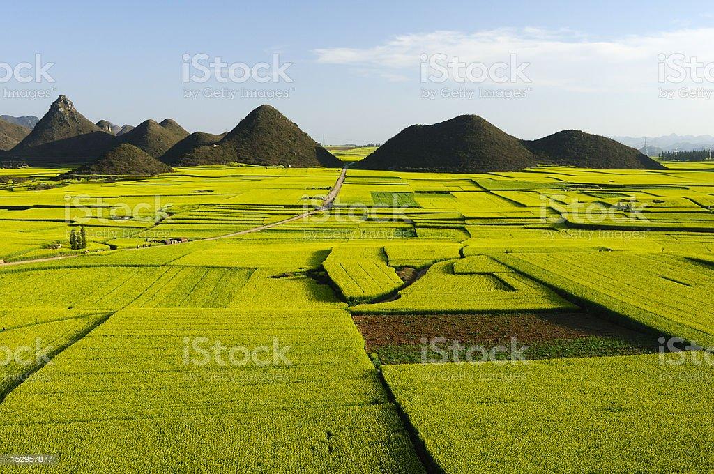 Beautiful field scenery stock photo