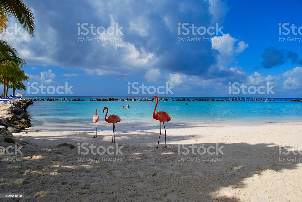 beautiful Flamingos on a paradise Beach stock photo