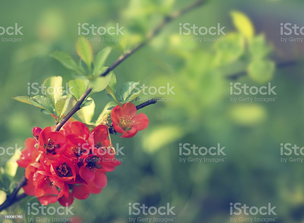 Beautiful floral border on green background royalty-free stock photo