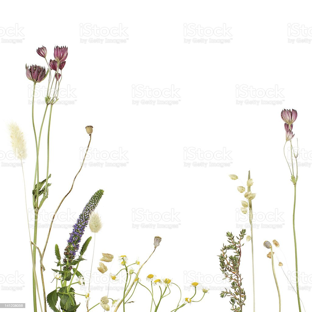 A beautiful floral border template for stationery  stock photo