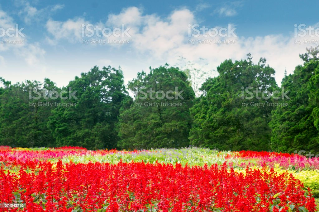 Beautiful floral in the garden stock photo