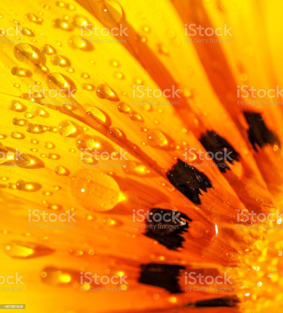 Beautiful flower background stock photo