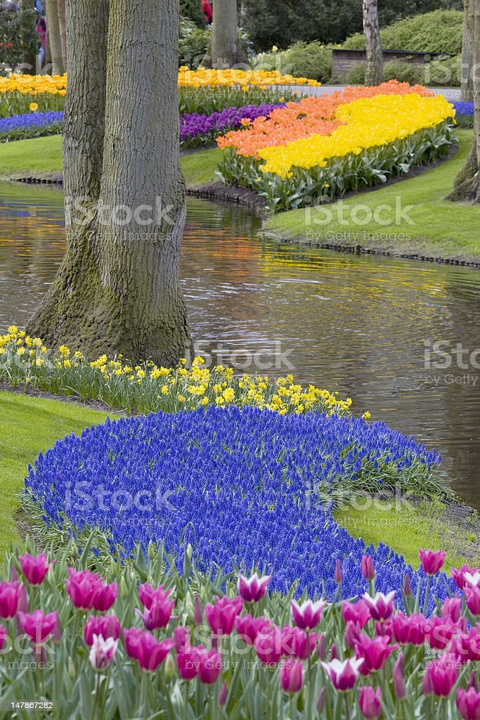 Beautiful flower bed of tulips in park royalty-free stock photo
