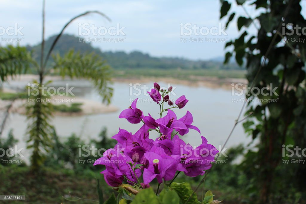 Beautiful flower beside the river stock photo