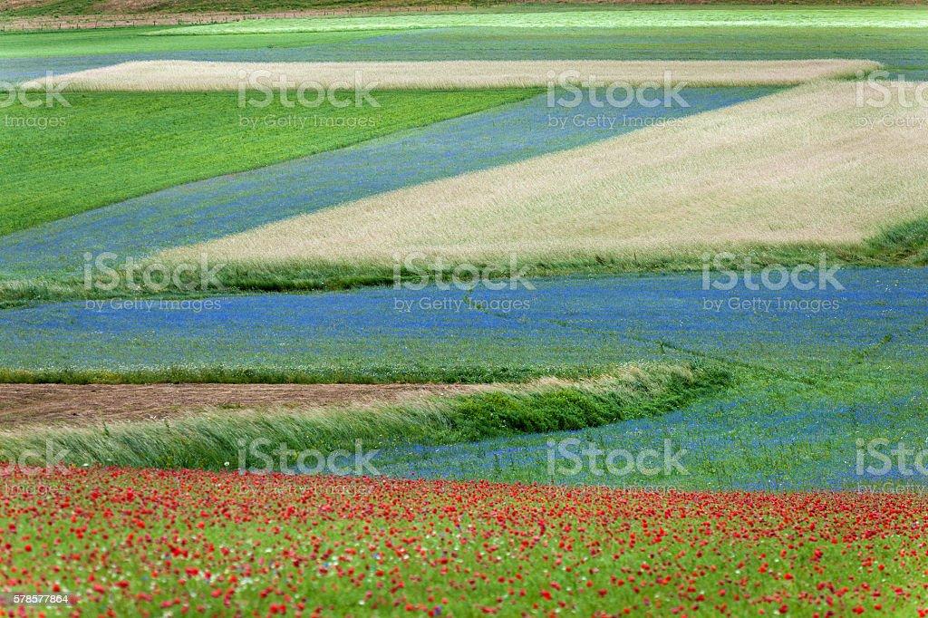 Beautiful Flower Field, Castelluccio, Umbria, Italy stock photo