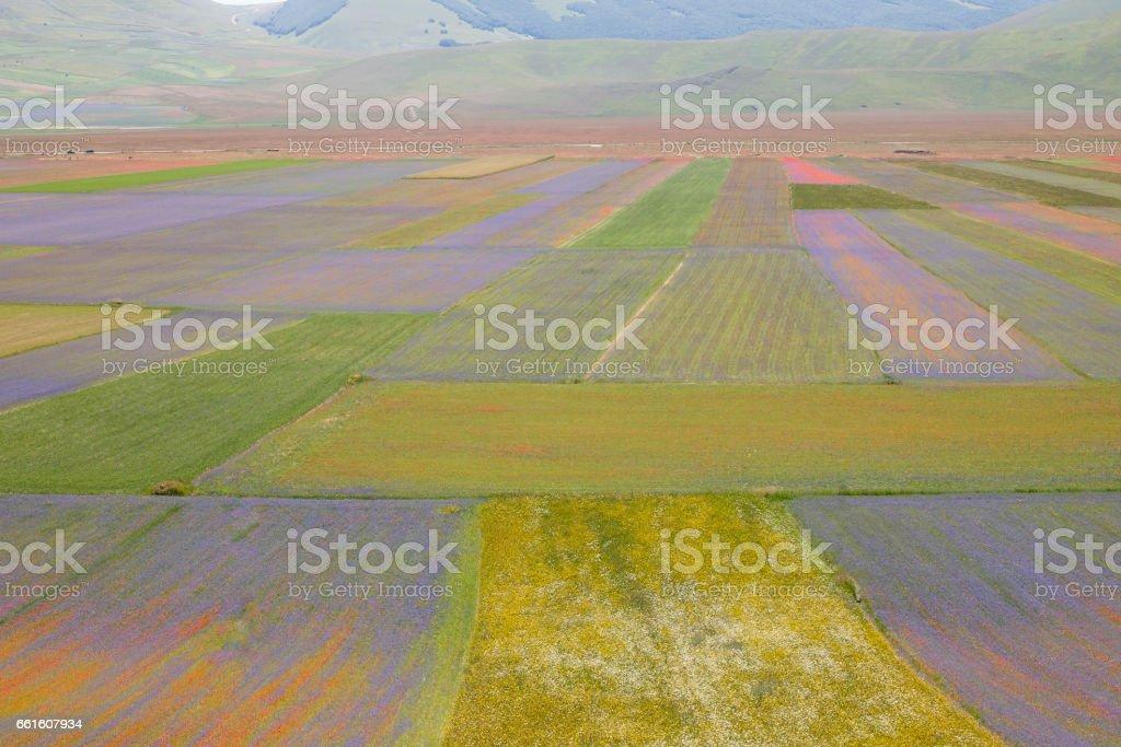 Beautiful flower fields stock photo