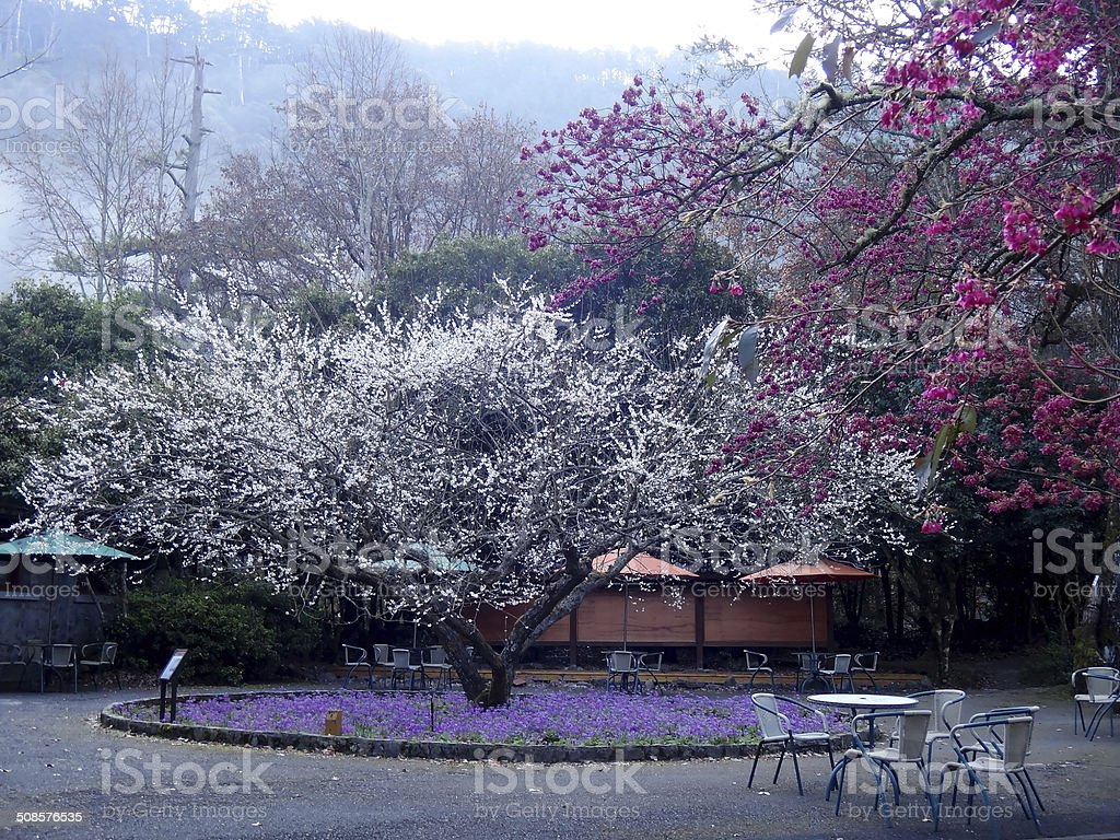 Beautiful flower Garden in Wuling Farm Taiwan stock photo