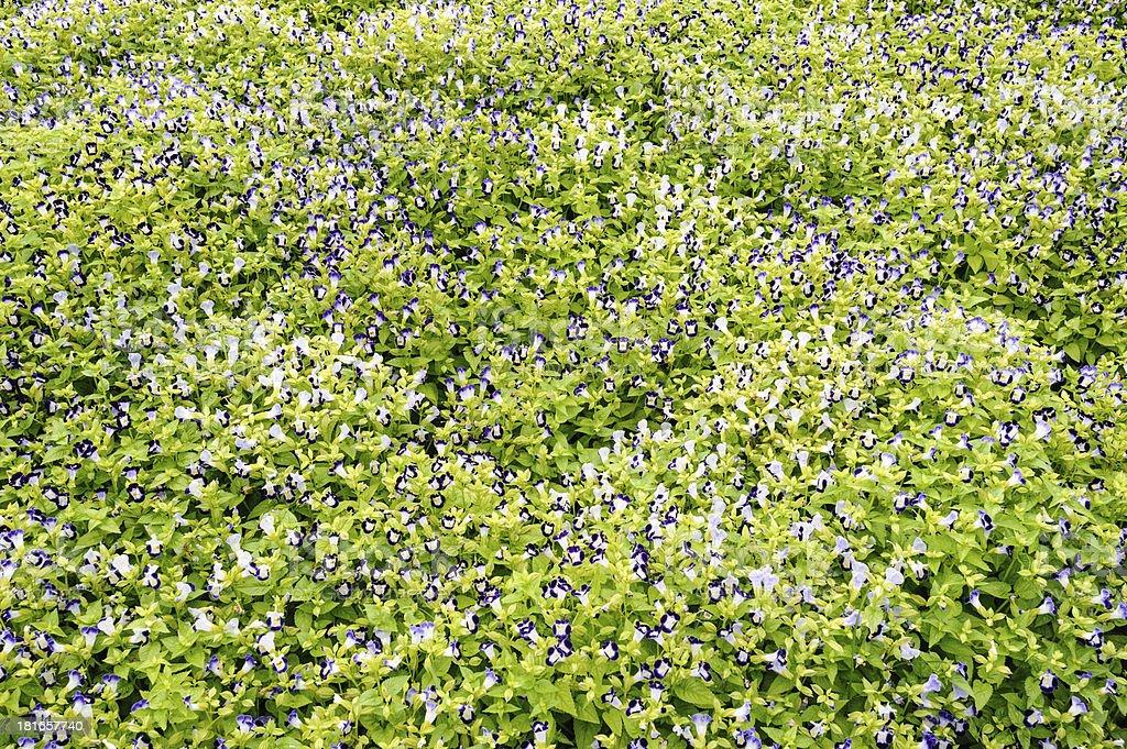 Beautiful flower in garden royalty-free stock photo