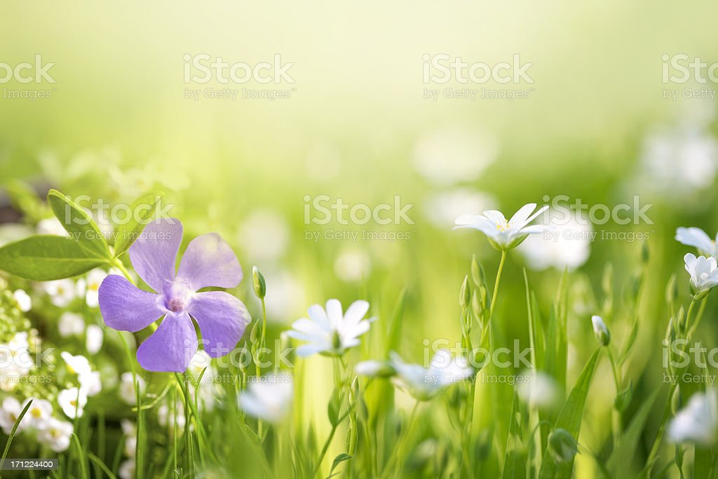 Beautiful flower in the field royalty-free stock photo