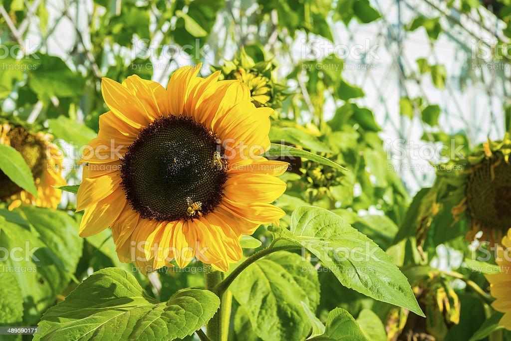 Bela flor foto royalty-free