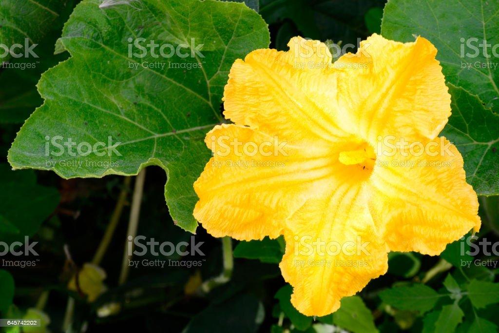 Beautiful flower pumpkin. stock photo