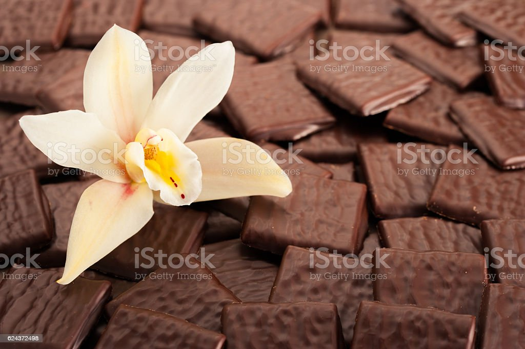 beautiful flower representing vanilla on pile of chocolate stock photo