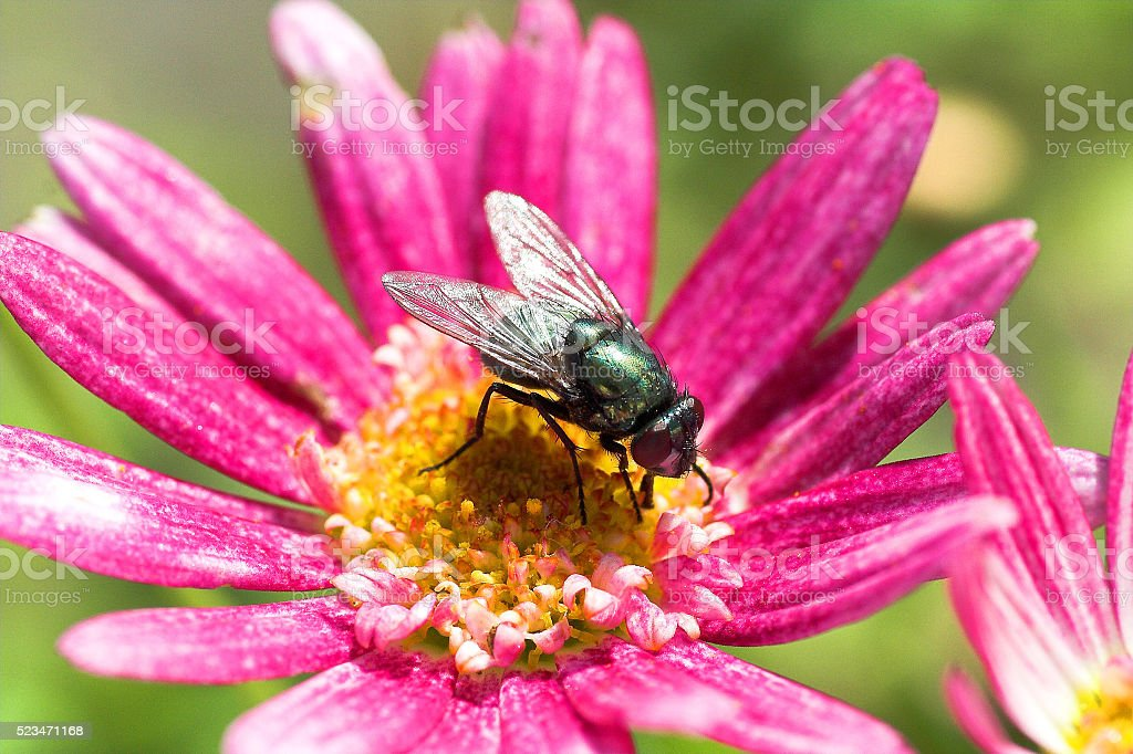 Beautiful flower with an insect stock photo